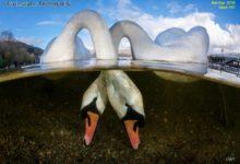 مجله عکاسی و فیلم برداری زیر آب شماره 101